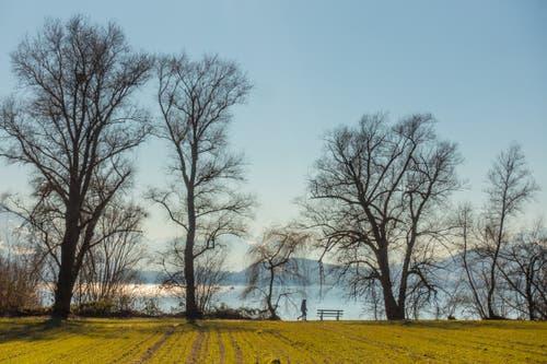 Das warme Grün des Feldes steht im Kontrast zum kalten Blau des Winters. (Bild: Erich Würgler (Zug, 18. Februar 2019))
