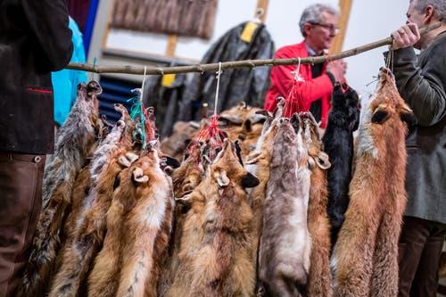 Rotfüchse warten auf ihre Käufer.