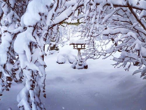 Verschneit in Unterägeri. (Bild: Silke Schmidt, Unterägeri, 3. Februar 2019)