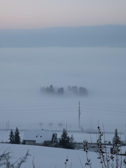 Über dem Nebel. (Bild: Bernadette Wiprächtiger, Kaltbach, 5. Februar 2019)