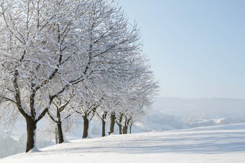 Wunderschöne Winterlandschaft auf dem Vorberg in Willisau- (Bild: Irene Wanner, Wilisau, 5. Februar 2019)