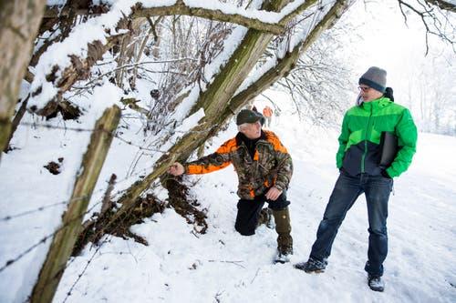 ... Jäger und der Tierschutz zusammengetan und wollen... (Bild: Mareycke Frehner)