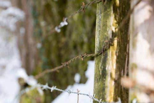 ...dass die Landwirte und Waldbesitzer die Zäune schnell abbrechen. Auch Weidezäune...(Bild: Mareycke Frehner)