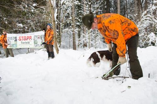 Sogar unter dem Schnee finden die Jäger... (Bild: Mareycke Frehner)