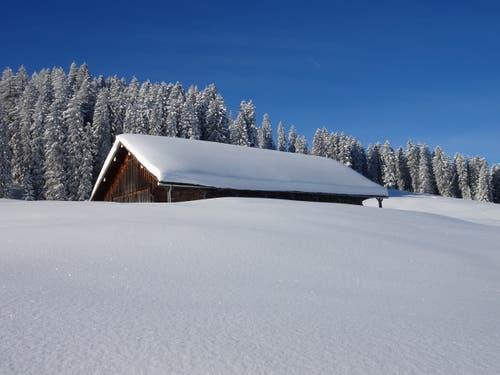 Verschneiter Alpstall. (Bild: Walter von Holzen, Hochstuckli, 4. Februar 2019)
