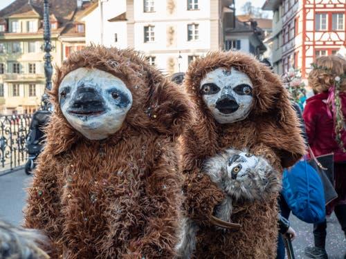 Eine Faultierfamilie. (Bild: Theres Nussbaumer, Luzern, 28. Februar 2019)