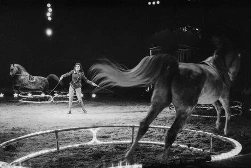 Freiheitsdressur mit Pferden, präsentiert von Géraldine Knie im Jahr 1993. (Bild: Keystone /Str)