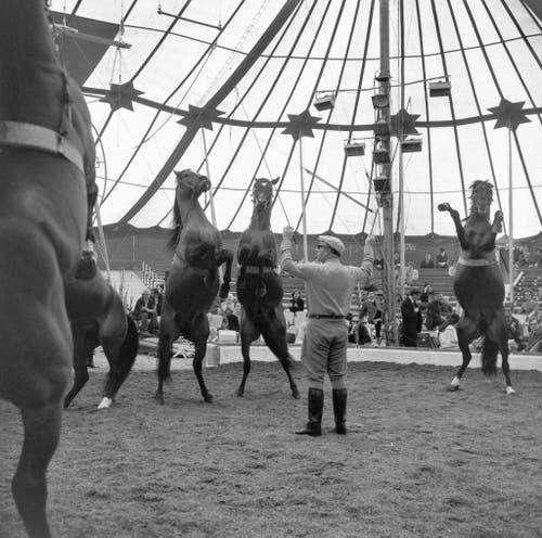 Traditionelle Pressematinee im Zelt des Zirkus Knie im Jahr 1967. (Bild: Keystone /Str)