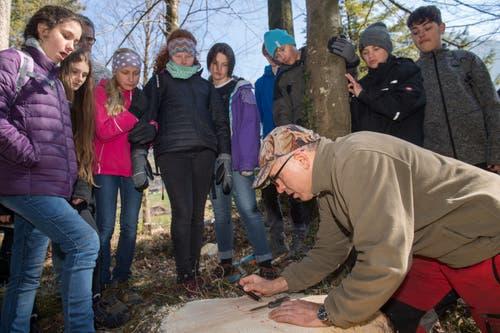 Oberstufenschüler von Wolfenschiessenverbringen den Schultag im Wald, lernen und arbeiten. Ruedi Scherer überprüft mit den Schülern, wie alt der Baum ist. (Bild: Eveline Beerkircher, Wolfenschiessen 21. März 2019