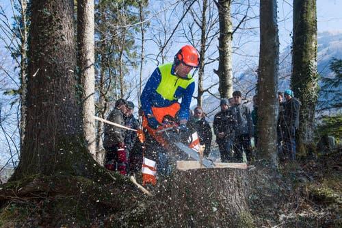 Oberstufenschüler von Wolfenschiessenverbringen den Schultag im Wald. Hans Odermatt zeigt, wie ein Baum gefällt wird. (Bild: Eveline Beerkircher, Wolfenschiessen 21. März 2019)