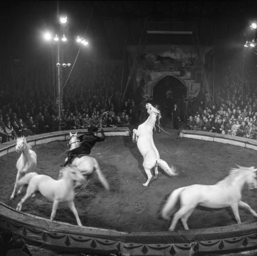 In Rapperswil findet im März 1958 die Galavorstellung mit reitenden Cowboys statt. (Bild: Keystone /Str)