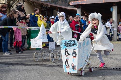 Die Eisbären zeigen beim Scheesen- und Garettenrennen in Udligenswil die Spitze des Eisbergs. (Bild: Philipp Schmidli, 3. März 2019)