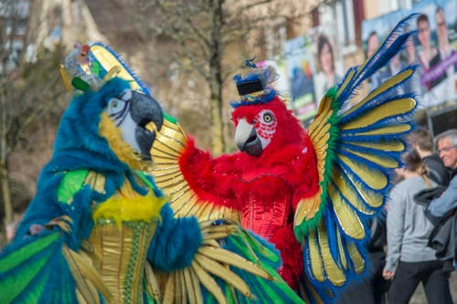 Zwei Papageien der Wagenbaugruppe Delirium mit dem Motto «Zirkus» flattern am Umzug der Egli-Zunft Horw durch das Dorf. (Bild: Pius Amrein, Horw, 3. März 2019)
