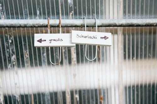 Rund vier Stunden in der Woche pflegt Schneeglöckchenliebhaber Yanik Neff die Frühlingsboten in seinem Treibhaus in Wald. Hier blüht es von Anfang November bis Ende Mai. (Bilder: Mareycke Frehner)
