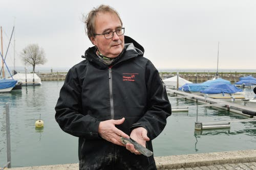 Kantonsarchäologe Hansjörg Brem zeigt im Hafen eines der bronzenen Beile, die beim Mäuseturm am Seegrund gefunden wurden. (Bild: Donato Caspari)