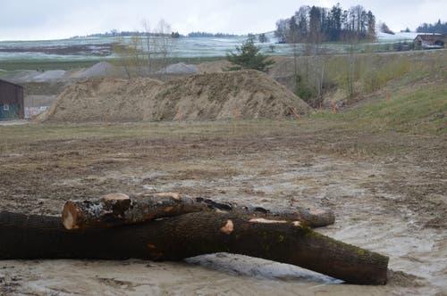 Für die Uferschwalben wurde eine künstliche Sandlinse erstellt, die noch verlängert wird.