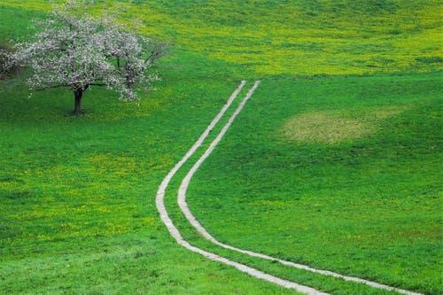 Der Weg zum Frühling. (Bild: André Egli, Altbüron, 13. April 2019)