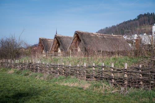 Die Pfahlbausiedlung im Wauwilermoos zählt zu den bedeutendsten steinzeitlichen Fundstellen Europas. (Bilder: Roger Grütter, Wauwil, 2. April 2019)