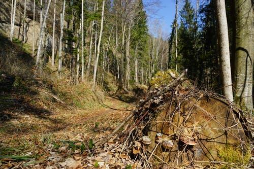 Ein ursprünglicher Wald, ohne Menschenhand natürlich.