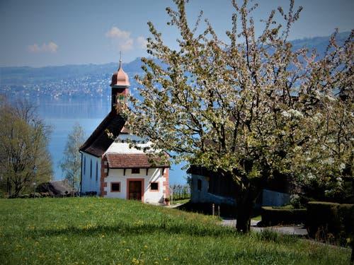 Was für eine herrliche, wunderschöne Umgebung. (Bild: Margrith Imhof-Röthlin, Buonas am See, 23. April 2019)