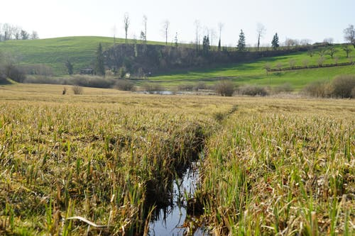Heute ist das Flachmoor Heimat für zahlreiche vom aussterben bedrohte Tier- und Pflanzenarten.