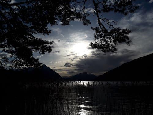 Abendstimmung im Naturschutzgebiet Weissenau. (Bild: Bruno Ringgenberg, Unterseen, 23. April 2019)
