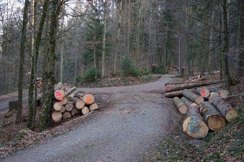 Den Wegweisern «Untere Buechholzstrasse» und «Wissholzweg» folgen.