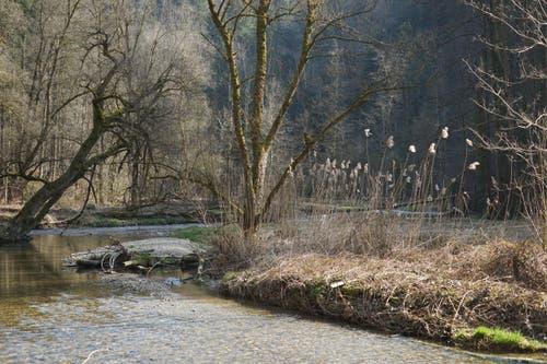 Schilfwedel, eine Flussschlaufe, schräge Bäume.