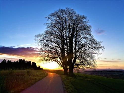 Wunderbarer farblicher Sonnenuntergang. (Bild: Urs Gutfleisch, Ruswil, 23. April 2019)