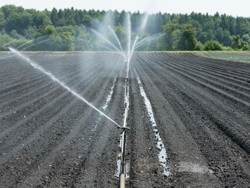Noch herrscht in der Schweizer Landwirtschaft im Vergleich zu Deutschland keine Alarmstimmung wegen Trockenheit. (Bild: KEYSTONE/THOMAS DELLEY)