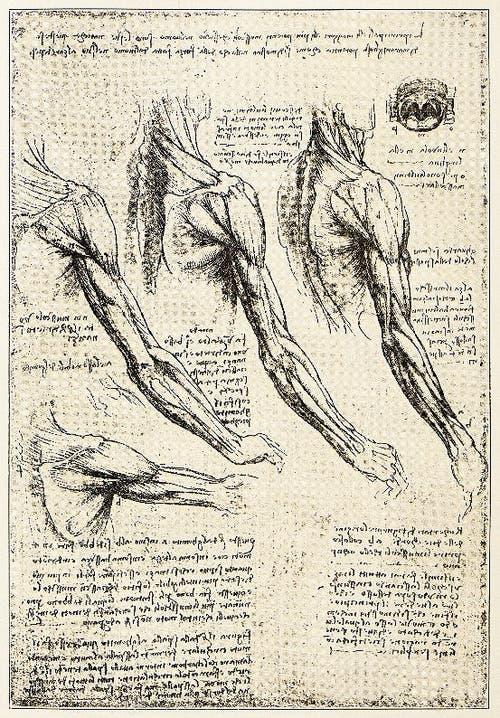 Breite Skizzenpalette: Kanonen, Gesichter, Muskeln, ein Panzer, ein Vogelschwingenapparat und Pferde. (Bild: Bilder: Getty, Alamy, KEY)