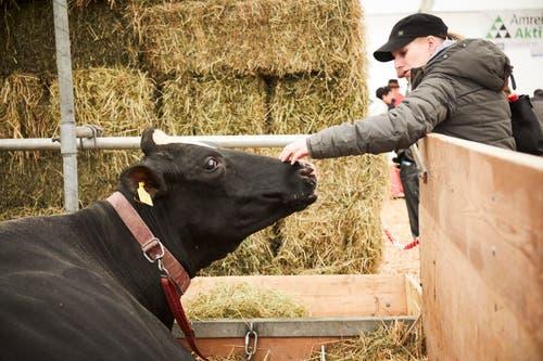 Streicheleinheit für eine Luga-Kuh. (Bild: Jakob Ineichen, Luzern, 27. April 2019)