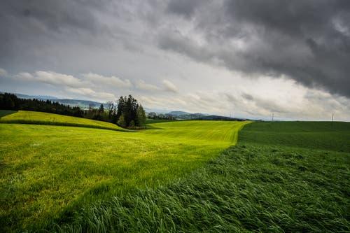 Heute Regen, die Natur freuts! (Bild: Vinzenz Blum, Ebersecken, 27. April 2019)