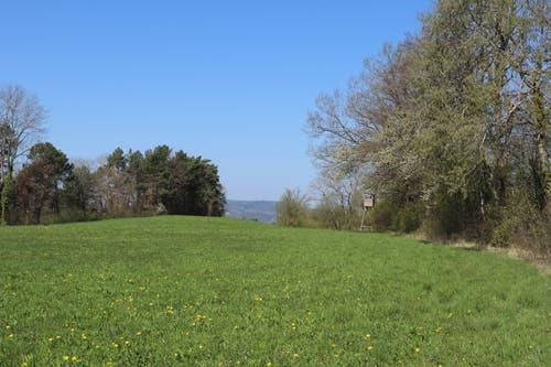 Nach dem Wald ist rechts ein Hochsitz zu sehen. Nach dem Waldweg folgt ein Stück ein Feld entlang. (Bild: Marlen Hämmerli)
