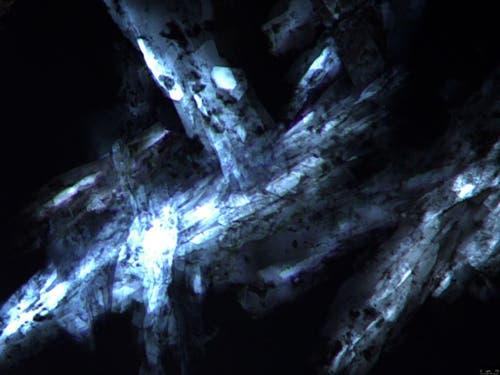 Monopalmitinkristalle bei 40-facher Vergrösserung. Monopalmitin ist Teil gängiger Fette wie Milchfett oder Kakaobutter und stabilisiert Luftblasen, beispielsweise in Mousse au Chocolat. (Eingereicht in der Kategorie «Forschungsobjekt») (Bild: Kim Mishra (ETH Zürich))