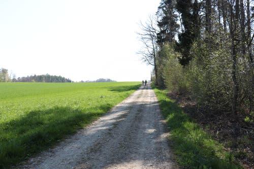 Rechts im Wald liegt die erste Feuerstelle. Wer nicht rastet, geht den Wald entlang. (Bild: Marlen Hämmerli)