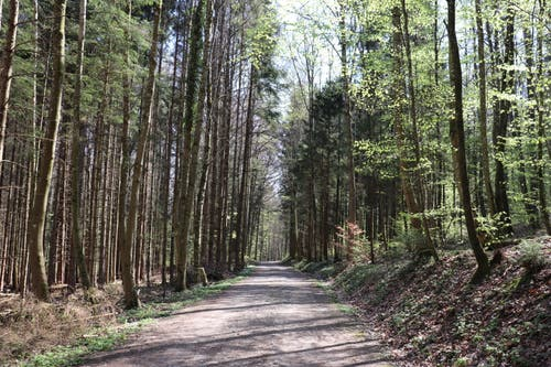 Der zweite Wald auf dem Weg wird «Franzoosewald »genannt. (Bild: Marlen Hämmerli)
