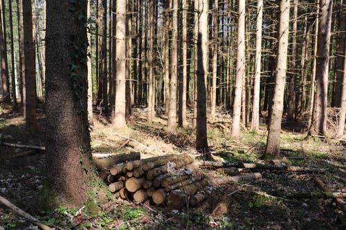 Im Wald sind viele kleine Holzstapel aufgehäuft. (Bild: Marlen Hämmerli)