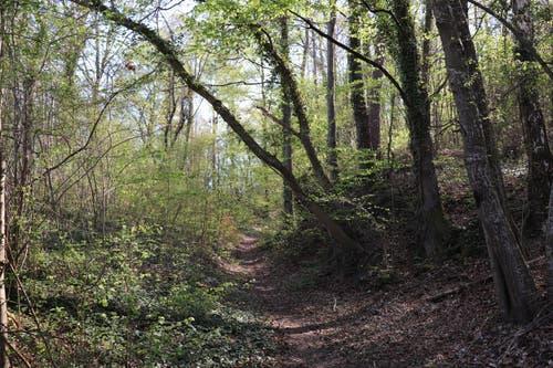 Ein Waldweg führt zum Burst. Für Personen mit Kinderwagen ist besonders dieses Stück beschwerlich. (Bild: Marlen Hämmerli)