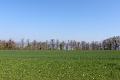Blick über den Burst und Richtung Bodensee. (Bild: Marlen Hämmerli)