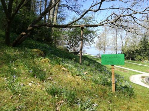 Das Betreten der Wiese ist verboten. (Bild: Marlen Hämmerli)
