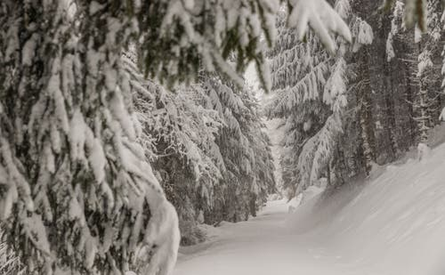 Verschneite Tannen auf dem Zugerberg. (Bild: Daniel Hegglin, 04. April 2019)