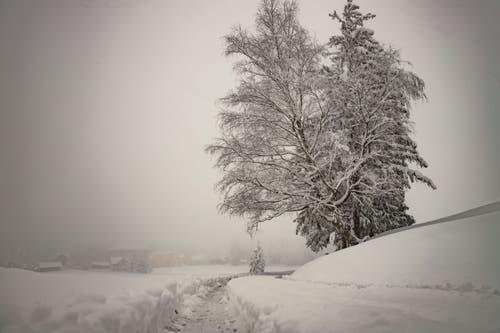 Der Winter ist zurück auf dem Zugerberg. (Bild: Daniel Hegglin, 04. April 2019)