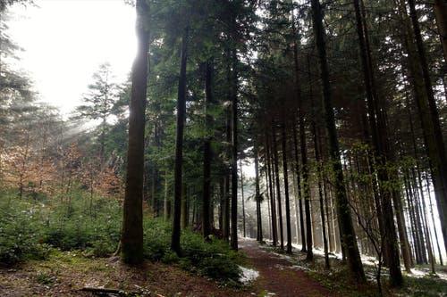 Stimmung im Bogetenwald nach dem Frühlingsschnee. (Bild: Josef Habermacher, Rickenbach, 6. April 2019)