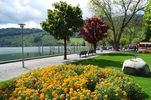 Es blüht im Park Seefeld in Sarnen. (Bild: Bruno Ringgenberg, Sarnen, 12. Mai 2019)