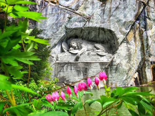Beim Löwendenkmal blühen die Blumen. (Bild: Leila Aebli, Luzern, 9. Mai 2019)