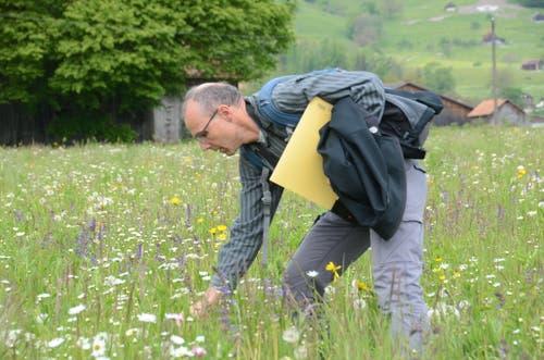 Urs Weber zeigte Blumen wie Wiesensalbei, Wiesenknopf, Rotes Waldnägeli, Kohldisteln oder Wiesenflockenblumen. (Bilder: Corinne Hanselmann)
