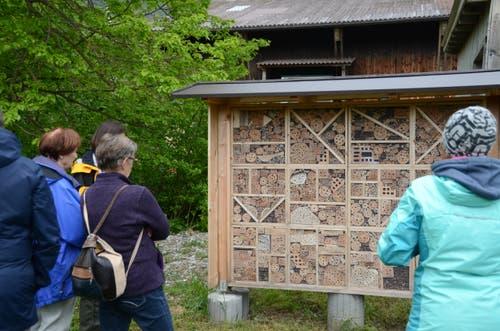 Beim Wildbienenhotel, das Schüler aus Frümsen und Salez erstellten, konnte man Insekten beobachten.