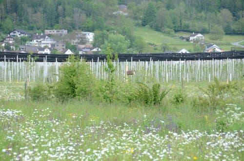 Zehn Hecken mit 17 verschiedenen Straucharten wurden angelegt.