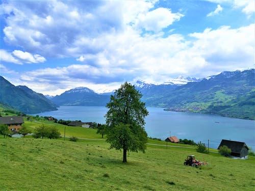 Herrlicher Ausblick auf den Vierwaldstättersee und die Berge. (Bild: Urs Gutfleisch, Bürgenstock, 14. Mai 2019)